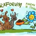 Forum dokarmia psy