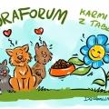 Forum dokarmia koty