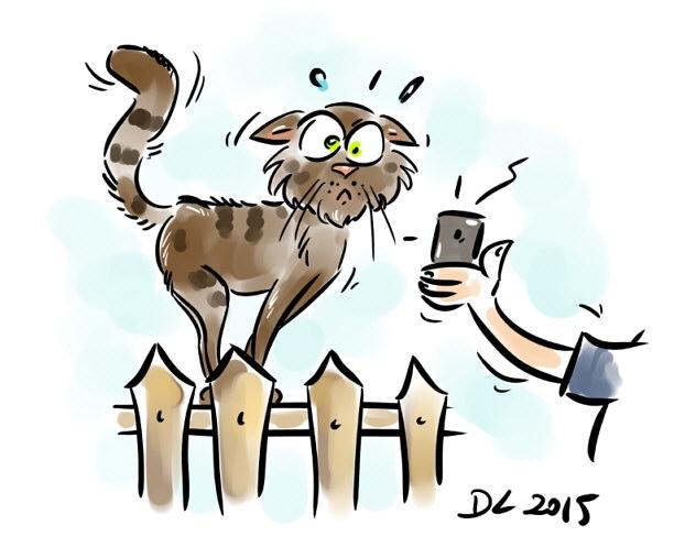 Kot w internetach.